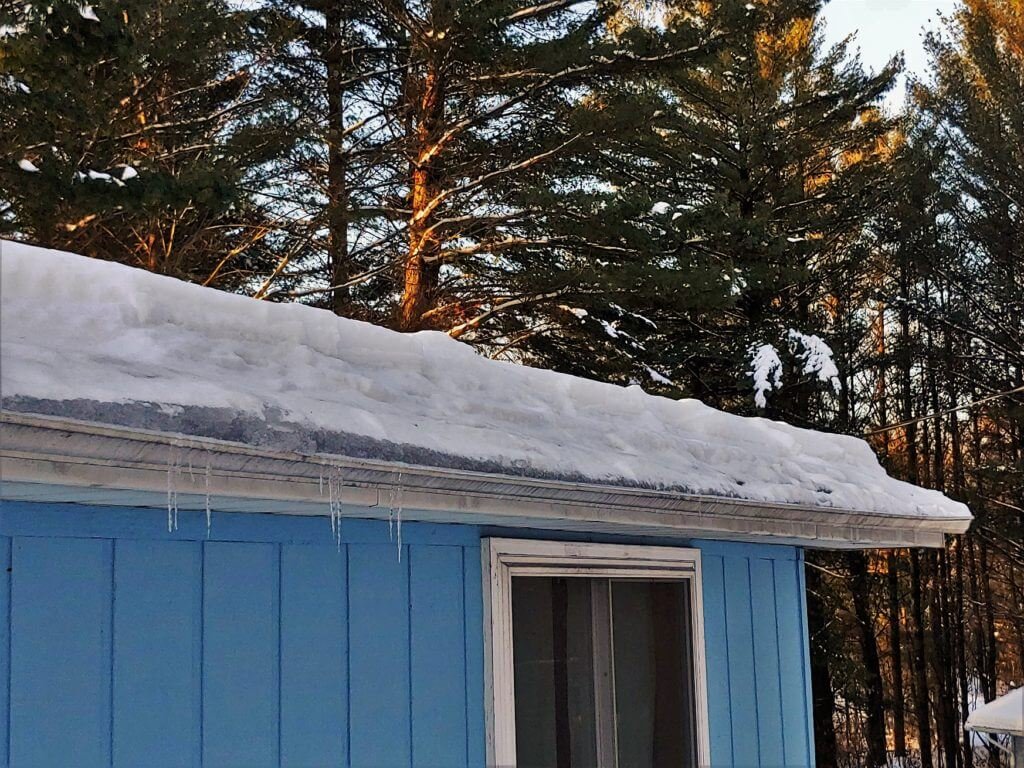 snow on trees and roof